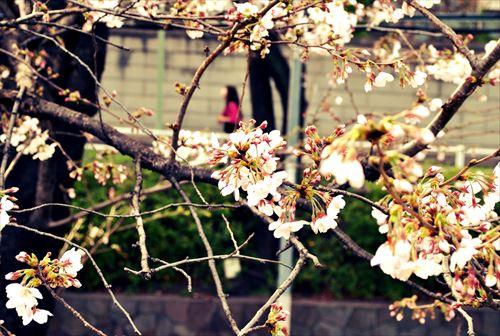 jojosuma005_R_20140329220513786.jpg